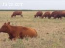 Finca en Argentina con riego, agrícola y ganadera