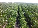 3550 hectareas  agricolas en venta en argentina