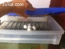 Chocadeira de 50 a 60 ovos totalmente automatica RJ