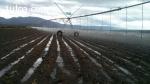 Finca Agrícola en Argentina - PRECIO MUY INTERESANTE