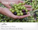 Finca de Olivares en La Rioja - Argentina