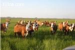 Finca Ganadera en Argentina - Importante rentabilidad