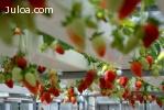Hidroponía - Nutrientes fructificación