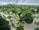 Hidroponía - Nutrientes Vegetativa