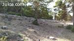 SE vende 600 ovejas merinas PAC - Teruel