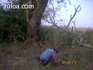 semillas forestales venezuela