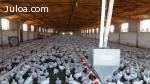 Venta de explotación avícola