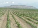 venta de tierras OLMOS PERU SUDAMERICA