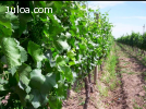 Venta de Viña en Argentina