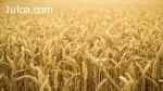 Venta Derechos Agricolas PAC